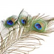 Royalty-Free Stock Photo: Bouquet peacock feathers