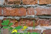 Fragment of the brick wall — Stock Photo
