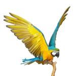 Parrot — Stock Photo #1357202