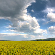 Spring landscape - Foto Stock