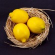Stock Photo: Nest Egg Turned into Lemons