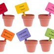Foto Stock: Group of Clay Pots with Colored Signs