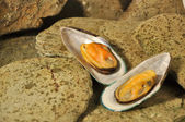 New Zeland Greenshell Mussels — Stock Photo