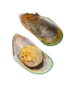 New Zeland Greenshell Mussel — Stock Photo