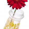 Gerbera Daisy in a Vase — Stock Photo