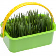图库照片: Spring Grass in Vibrant Green Basket