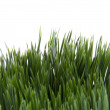 Green Grass on White — Stock Photo