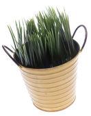 Hierba fresca — Foto de Stock