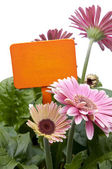Pink Daisies with Blank Orange Sign — ストック写真