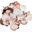 Stack of Seashells — Stock Photo