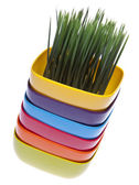 Stack of Vibrant Bowls with Fresh Grass. — Stock Photo