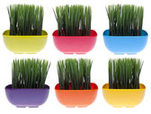 Set of 6 Vibrant Grass Filled Bowls — Stock Photo