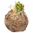 Stock Photo: Celery Root