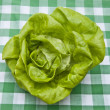 Hydroponic Bibb Lettuce - Stock Photo