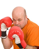 Boxer — Stock Photo
