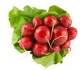 Red radish — Stock Photo