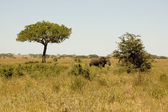 Elefant-21 — Stock Photo