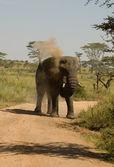 Elefant-24 — Foto de Stock