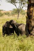 Elefant-28 — Stock Photo