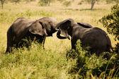 Elefant-26 — Stockfoto