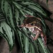 Stock Photo: Frogs-8