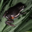 Stock Photo: Frogs-11