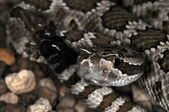 Snake-37 — Stock Photo