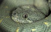 Snake-45 — Stock Photo