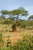 Kenia -2 — Foto de Stock