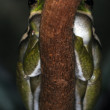 Stock Photo: Frogs-31