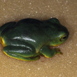 Stock Photo: Frogs-51