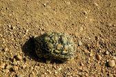 Turtle-9 — Stock Photo