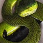 Snake-33 — Stock Photo