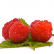 Forest raspberries — Stock Photo