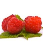 Forest raspberries — Stock Photo