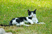 Beautiful cat on a grass — Stock Photo