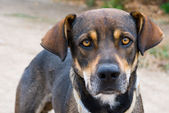 Dog with a speaking glance — Stock Photo