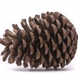 Royalty-Free Stock Photo: Front view of a pine cone