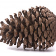 Front view of a pine cone — Stock Photo #1436331