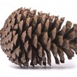 Stock Photo: Front view of pine cone