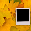 Blank card on the maple leaves — Stock Photo #1436499