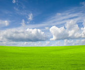 Blue sky and green field — Stock Photo