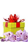 美丽的唐菖蒲以及礼品盒 — 图库照片