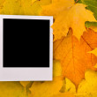 Blank card on the maple leaves — Stock Photo #1538855
