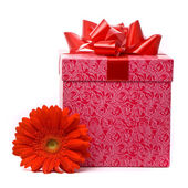 Orange gerber flower and gift box — Stock Photo