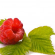 Forest raspberry. Macro shot. — Stock Photo