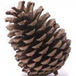 Stock Photo: Front view of a pine cone