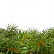 Close up of fir tree branch — Stock Photo #1656760