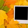Blank card on the maple leaves — Stock Photo #1689835
