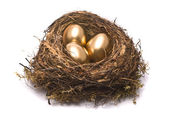 Gold eggs in a nest — Stockfoto